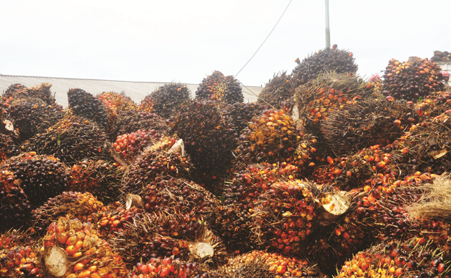 The FFB in North Sumatera on 9 - 15 September 2020 is Rp 2.019,38/Kg
